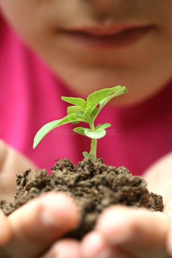 Growht sapling stock photos