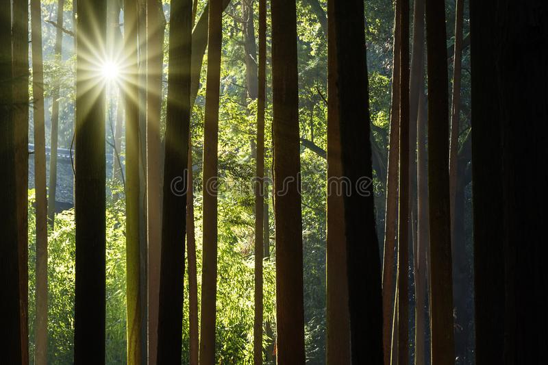 Growing bamboo border design over blurred sunny background royalty free stock photos