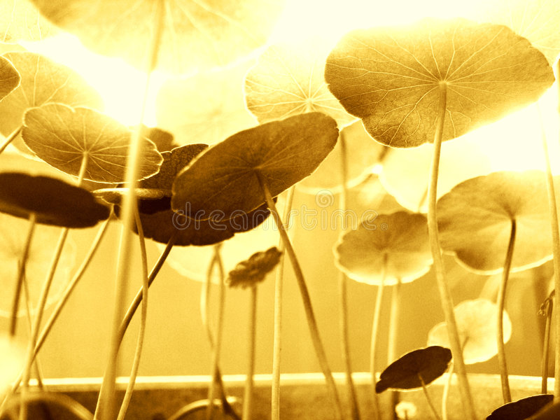 Growing in the bright sunlight stock photography