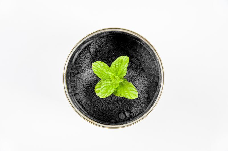 Growing canned plants for your own needs. Growing plants in canned and save the earth for the next generation stock image
