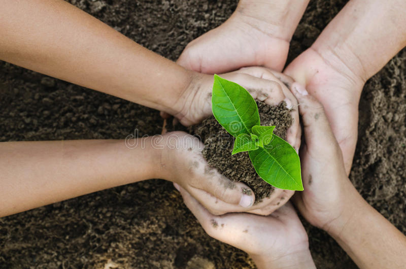 Growing concept eco Group hand children planting together on so stock photo