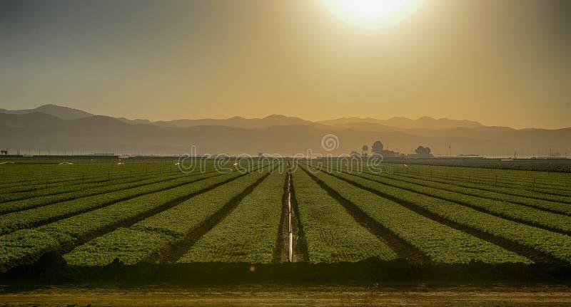 Growing Fields stock photos