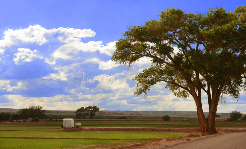 Growing Fields of New mexico royalty free stock images
