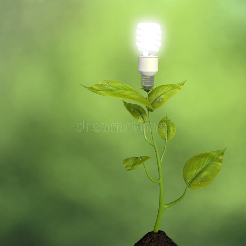 Growing Green Energy Royalty Free Stock Photos