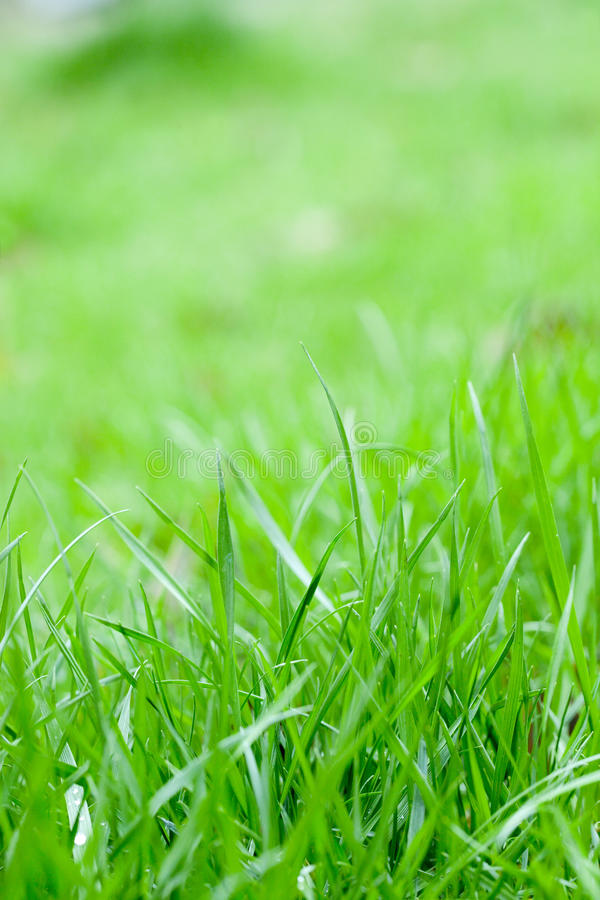 Download Green grass with sunshine stock image. Image of fresh - 30258999