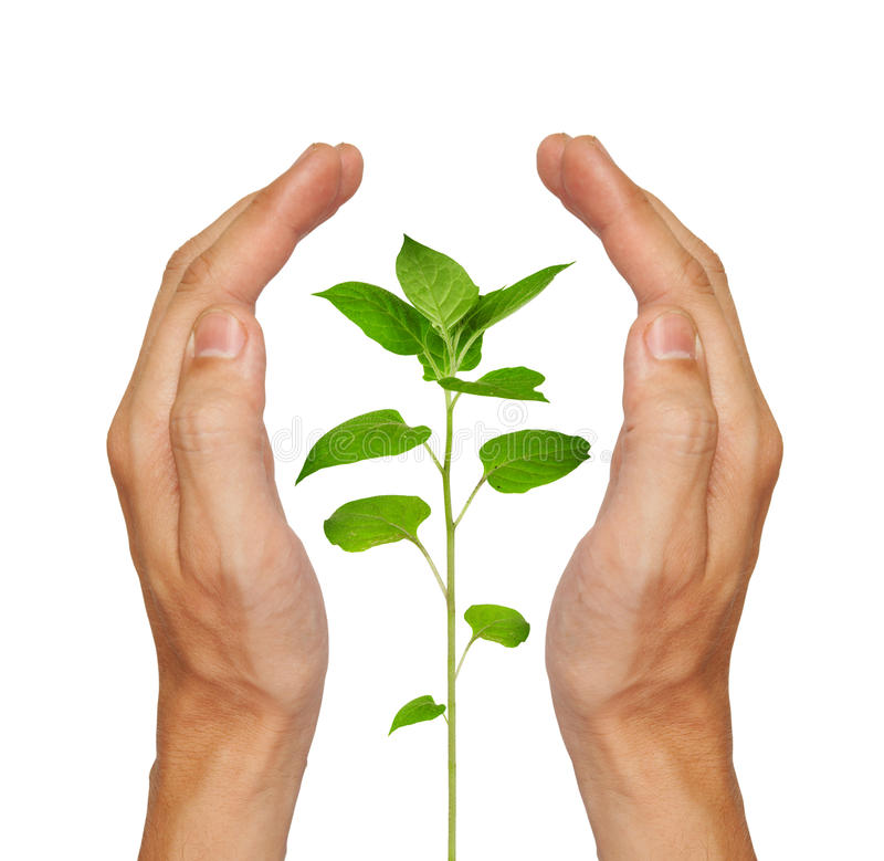 Download Growing green plant stock photo. Image of isolated, achievement - 14860346