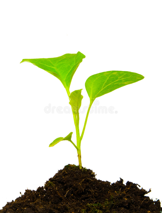 Growing green plant isolated stock photo