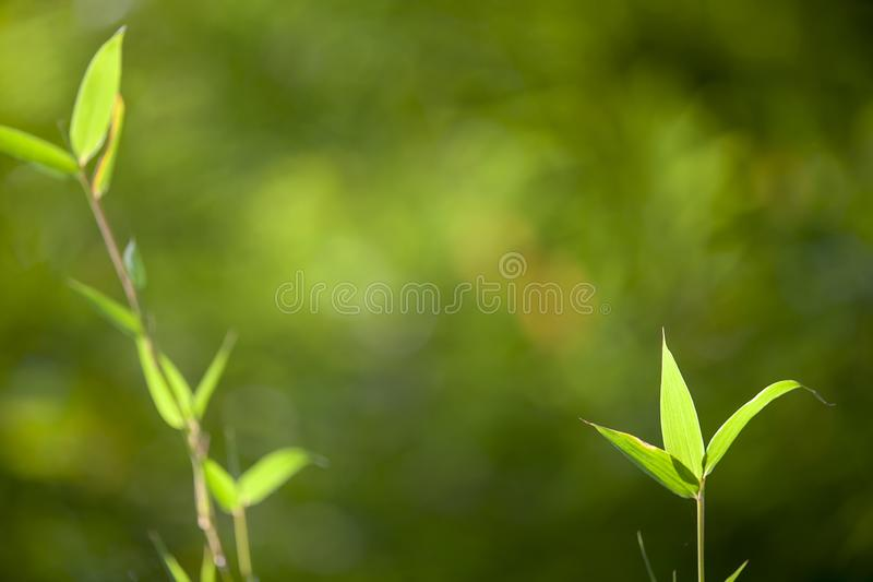 Growing Leaf Bamboo frame in forest or texture background with nice light stock photo