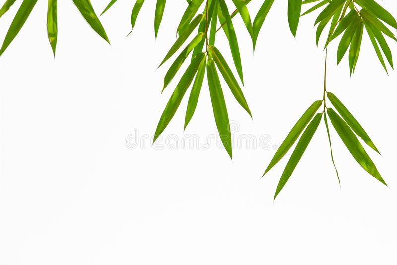 Growing Leaf Bamboo frame nature on white isolated texture backgroundclipping path. Green Energy and World for Water Day or stock photography