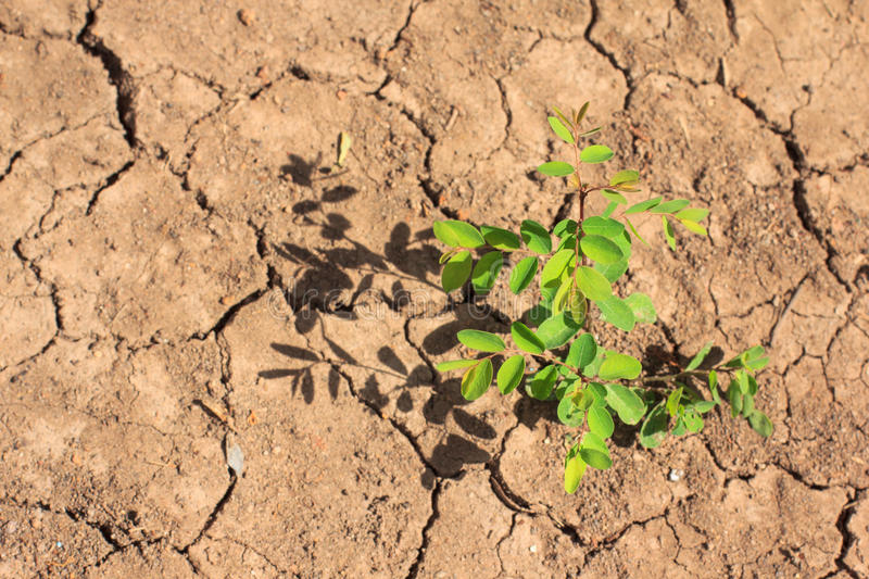 Growing little tree on dry and crack soil royalty free stock photography