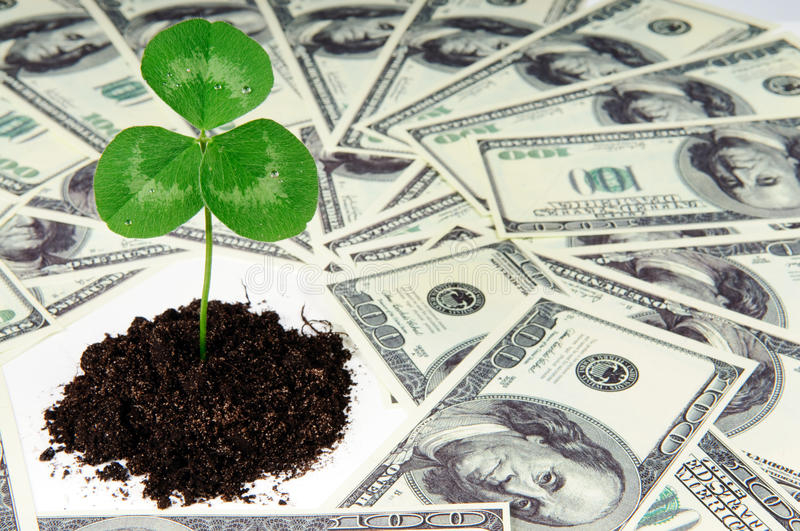 Growing money. Young plant and dollars - growing money concept royalty free stock image