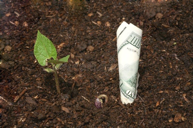 Growing Money (High Resolution File) stock photos