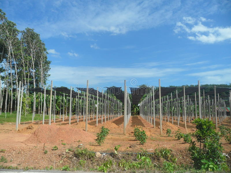 Growing plant farm stock image