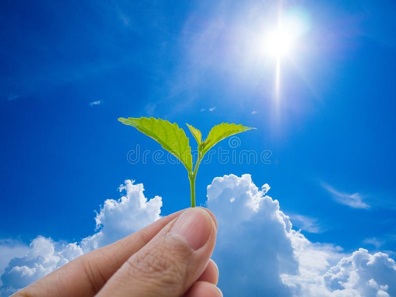 Growing a plant. Hands holding and nurturing tree growing on fertile soil / nurturing baby plant / protect nature / Agriculture on. Blue sky background stock photo