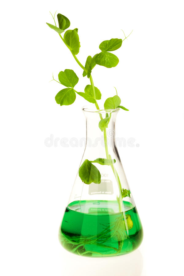 Growing plant in lab royalty free stock photo