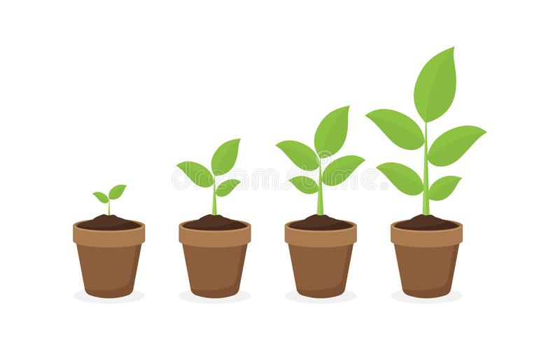 Growing plant in process. on white background. stock illustration