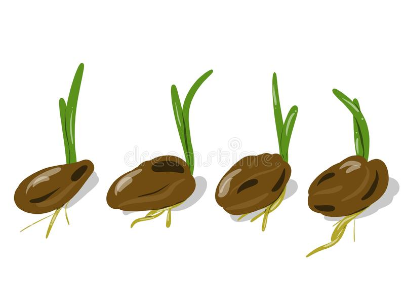 Growing plant and seeds royalty free illustration