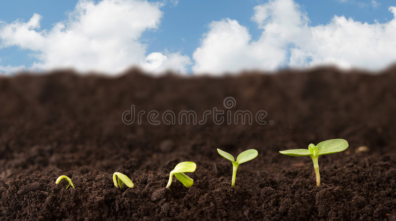 Download Growing Plant Sequence stock photo. Image of development - 2439574