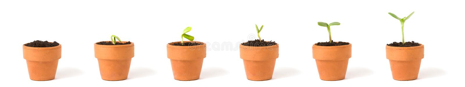 Download Growing Plant Sequence stock photo. Image of series, sprout - 2489434