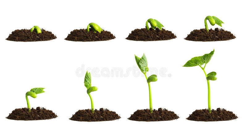 Growing plant in soil stock photo
