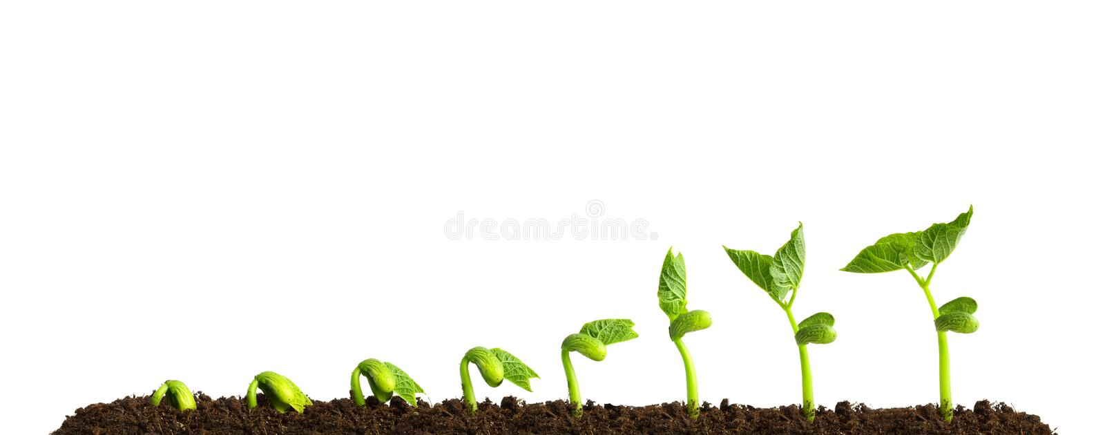 Growing plant in soil royalty free stock images