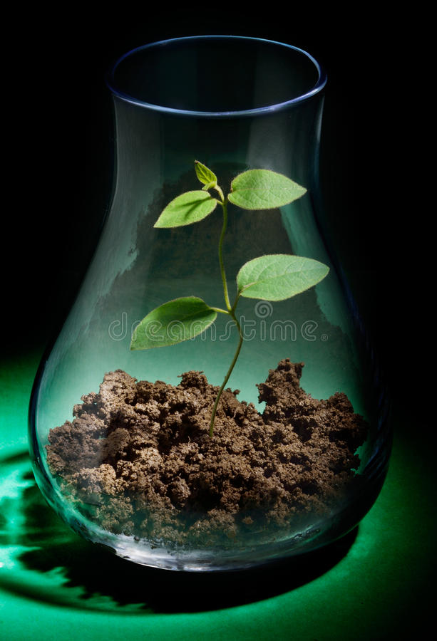 Growing plant in a test tube. New plant in a test tube on black background stock images