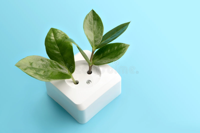 Download Growing plants stock photo. Image of appliance, alternative - 8765076