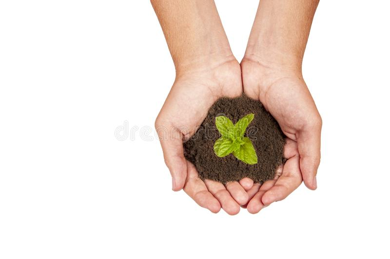 Growing plants on hand and save the earth. For the next generation royalty free stock image