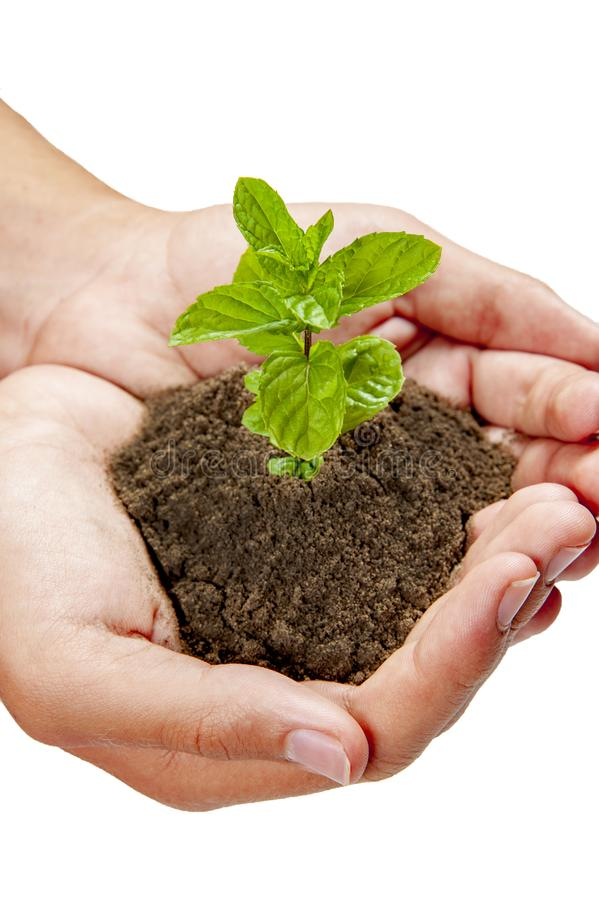 Growing plants on hand and save the earth stock images