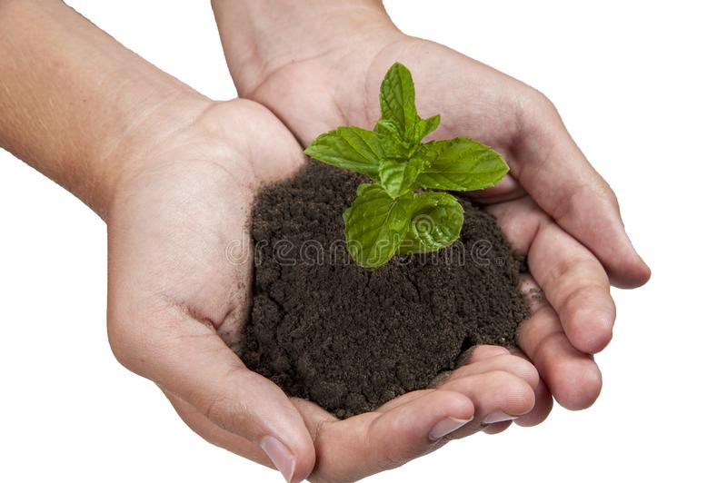 Growing plants on hand and save the earth for the next generation.  stock photo