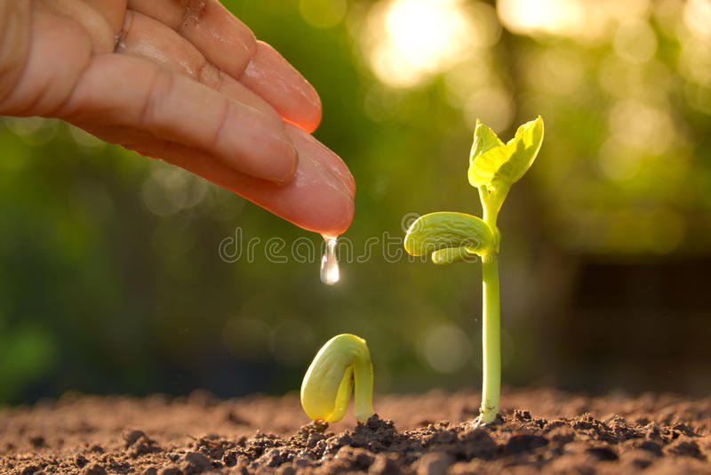 Growing plants. Plant seedling. Hand nurturing and watering young plants growing. royalty free stock photos