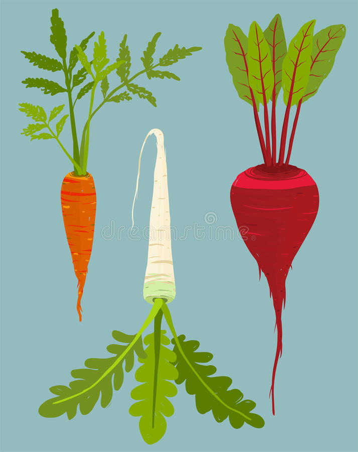 Growing Root Vegetables Set with Green Leafy Top. Vegetable gardening and cooking illustration. Layered vector EPS8 stock illustration