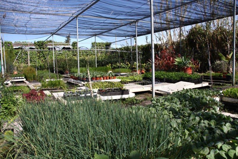 Growing seedlings stock photography