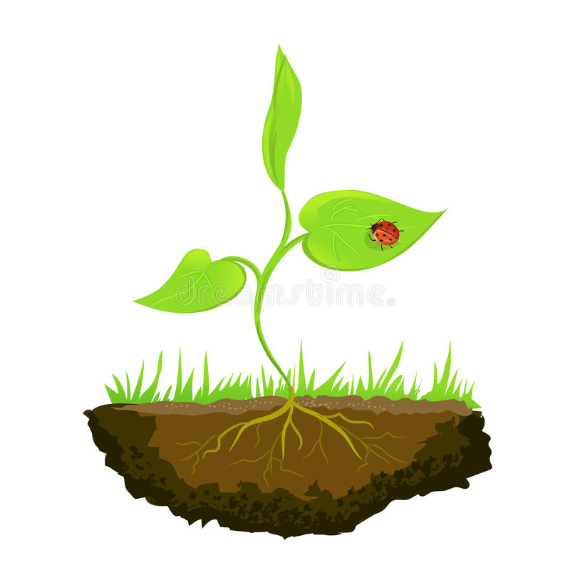 Growing shoots out of the ground. Illustration royalty free illustration