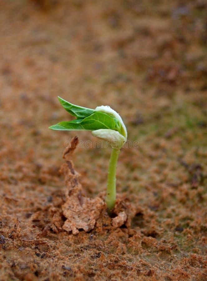 Growing Tree stock image