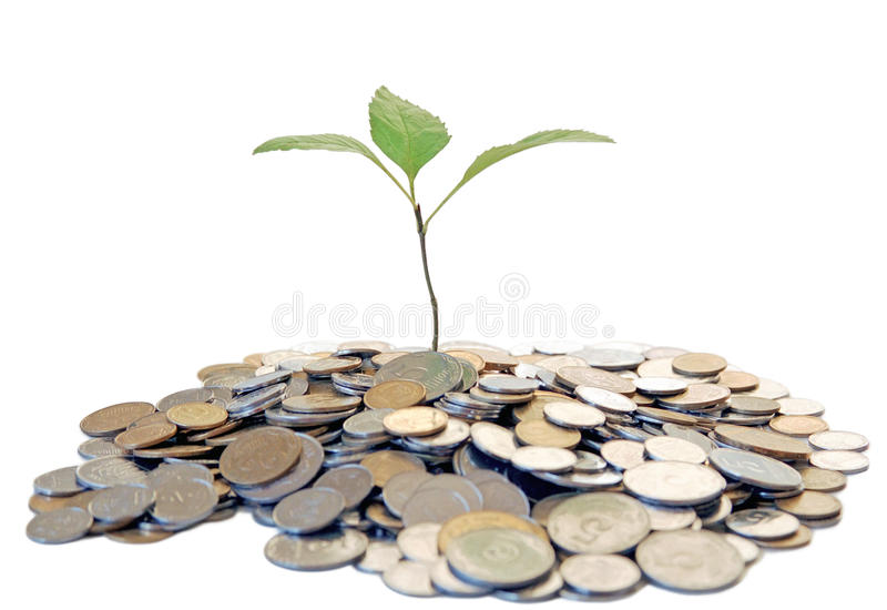 Growing tree from money stock photography