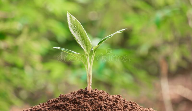 Growing trees flourish. Young plant in the morning light on nature background.  Growing trees flourish stock photo