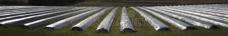 Download Growing Vegetables stock image. Image of vegetables, england - 4260839