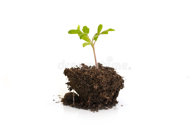 Growing young plant isolated on white background, new life, gardening, environment and ecology concept stock photography