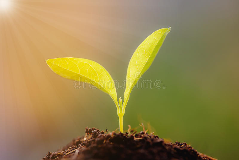 Growing young plants with sunlight. stock photography