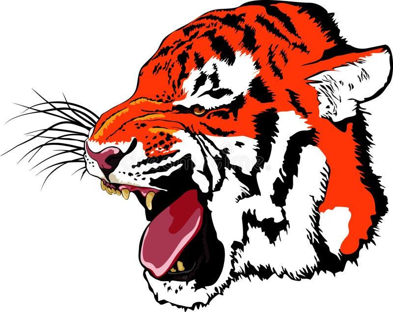 Growling tiger royalty free illustration