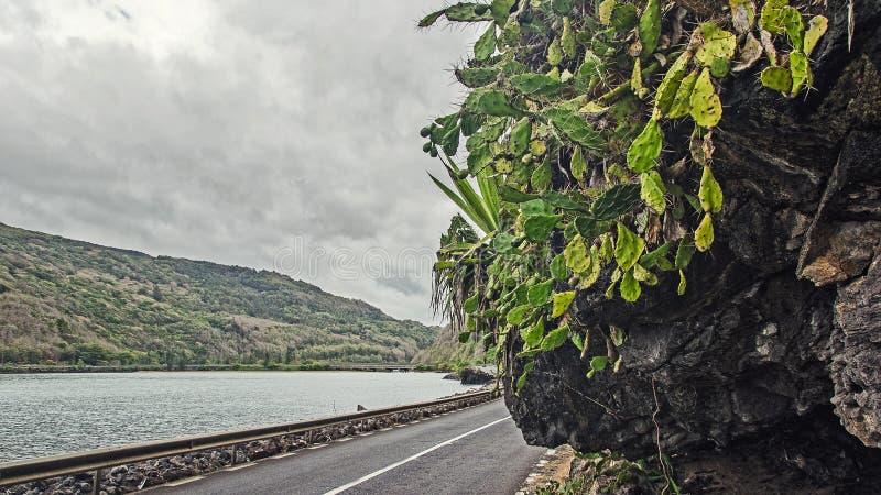 Growns de un cactus en la montaña fotografía de archivo libre de regalías