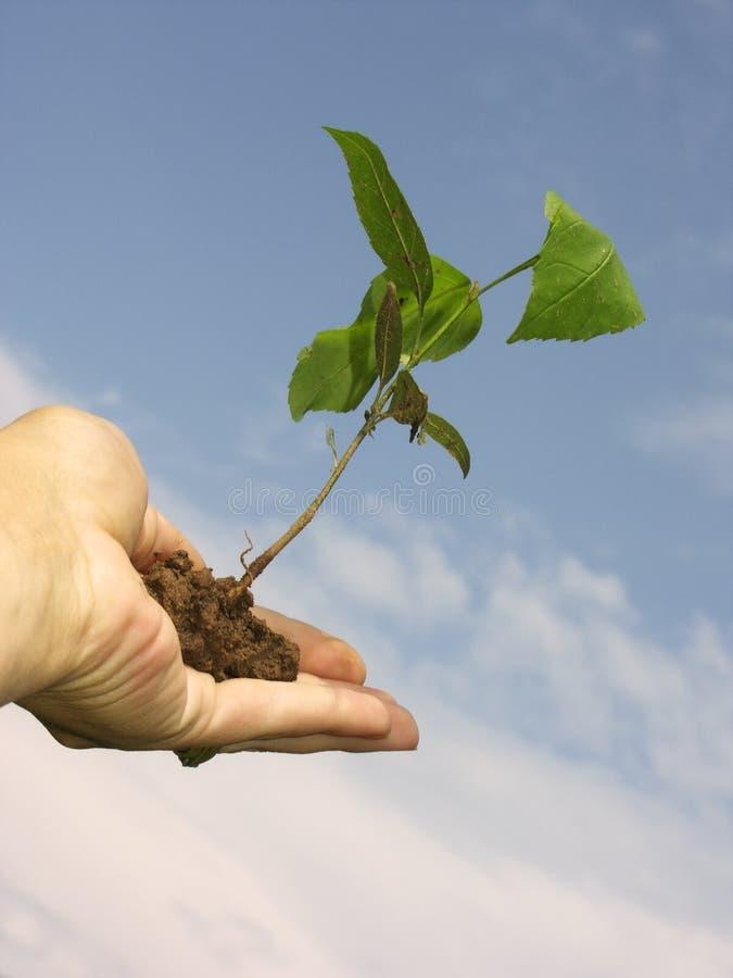 Free Growth 1 Stock Image - 248761