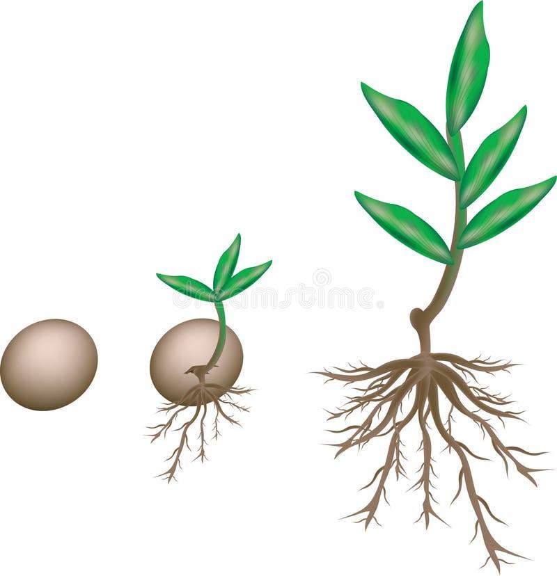 Growth vector illustration