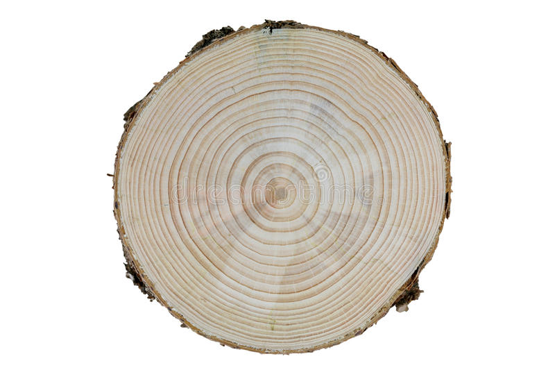 Growth. Cross-section of a pine tree trunk with differentiated growth rings isolated on white background royalty free stock photos