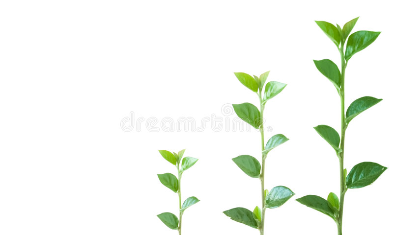 Download Growth stock photo. Image of grow, leaves, large, small - 3195456