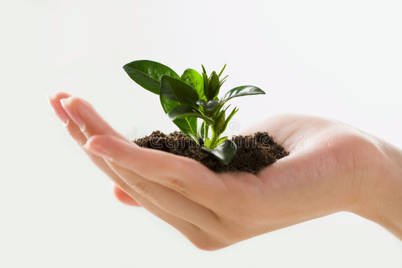 Growth. Image of female hand holding the small plant royalty free stock photography