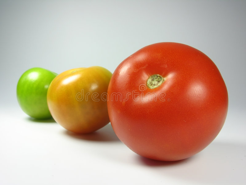 Growth. Growing tomatoes in traffic light colours royalty free stock image