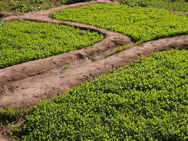 Download Growth stock photo. Image of green, outdoor, growth, ecology - 5346964