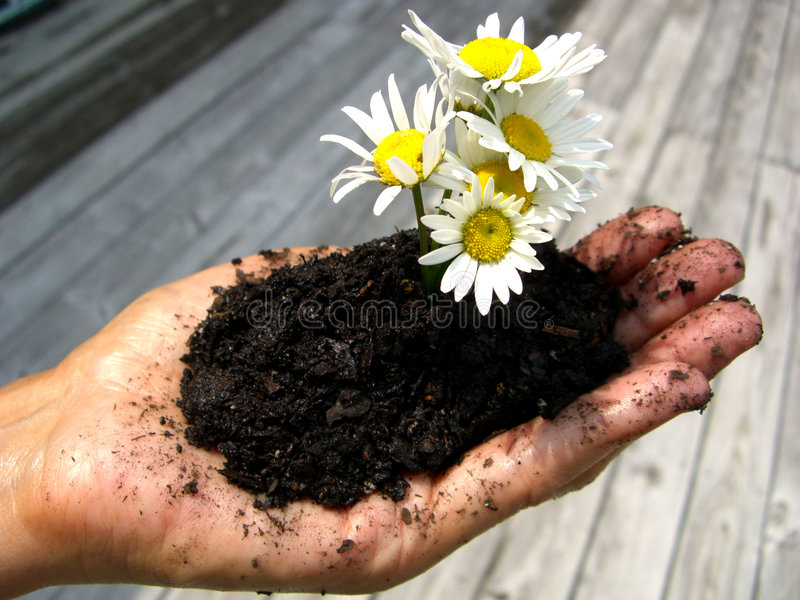 Download Growth stock image. Image of grow, petals, earth, calm - 5688869